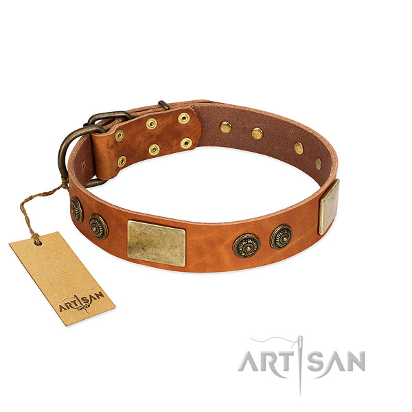 Designer genuine leather dog collar for everyday use