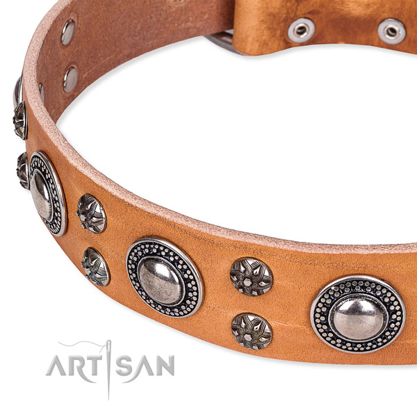 Stylish walking decorated dog collar of fine quality full grain natural leather