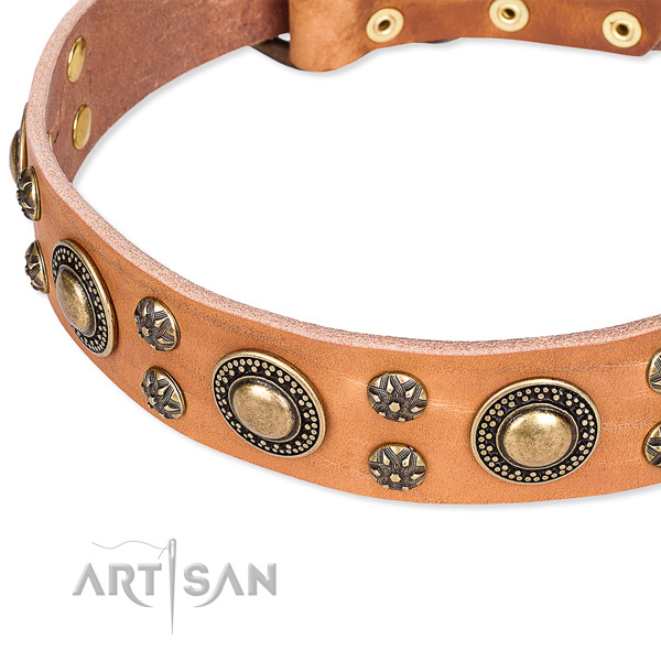 Fancy walking adorned dog collar of quality natural leather