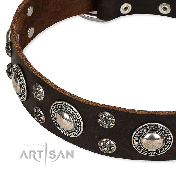 Stylish walking adorned dog collar of durable natural leather