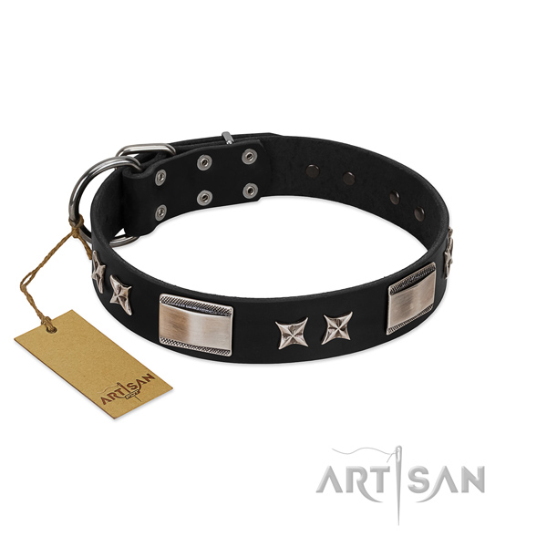 Stunning dog collar of leather