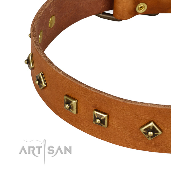 Amazing genuine leather collar for your beautiful four-legged friend