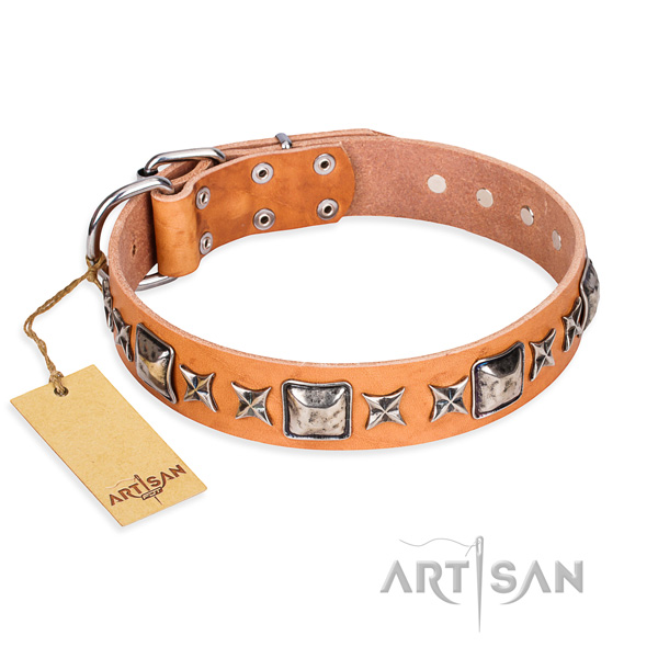 Everyday use dog collar of quality leather with studs