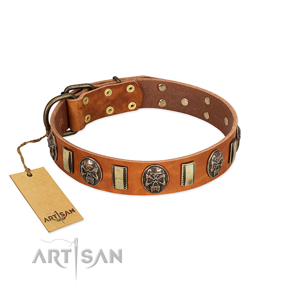 Stylish design leather dog collar for everyday walking