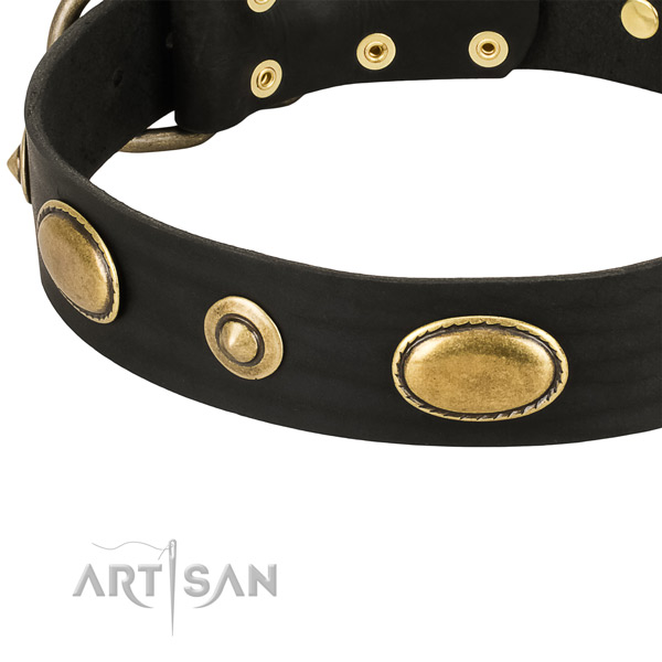 Corrosion resistant decorations on leather dog collar for your four-legged friend