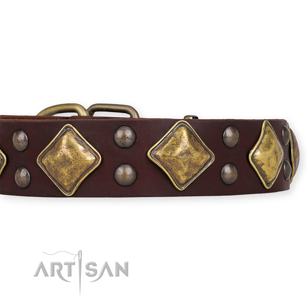 Full grain natural leather dog collar with unusual corrosion proof studs