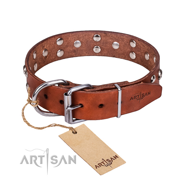 Stylish walking dog collar of fine quality leather with embellishments