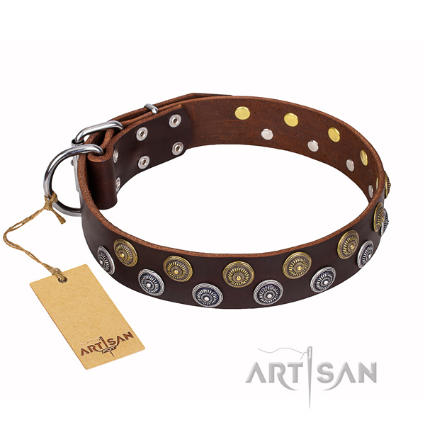 Stylish walking dog collar of strong full grain natural leather with decorations