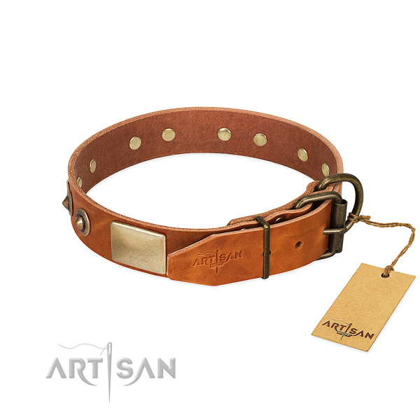 Reliable adornments on stylish walking dog collar