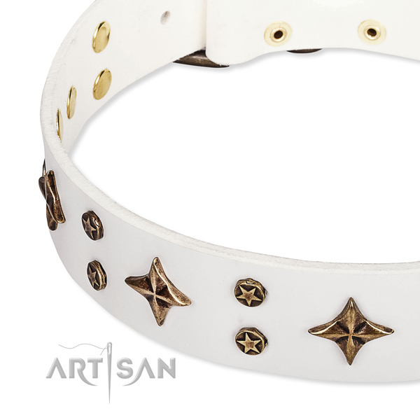 Fancy walking embellished dog collar of quality natural leather
