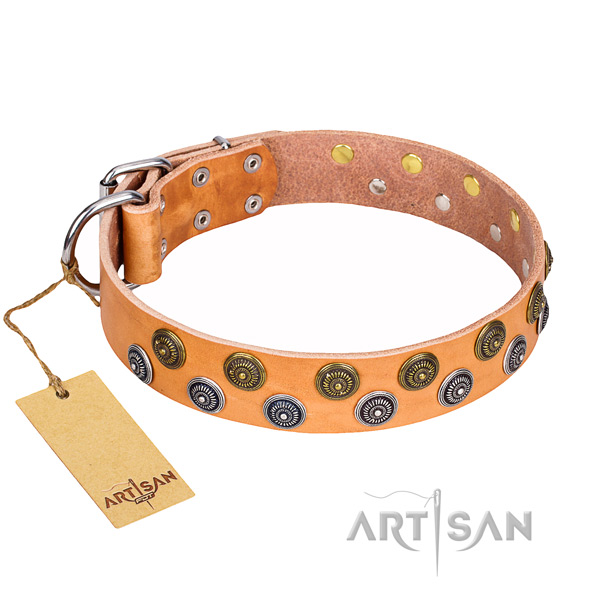 Fancy walking dog collar of top notch full grain leather with studs