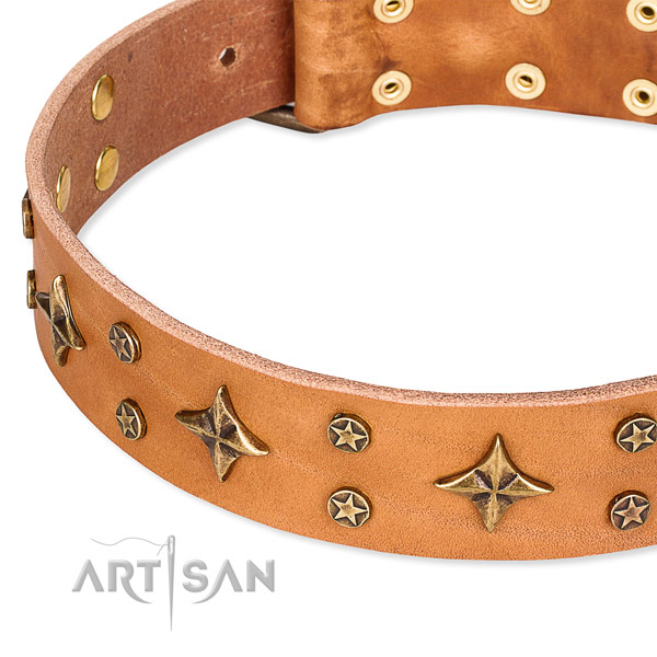 Daily walking adorned dog collar of best quality natural leather