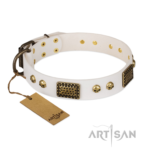 Corrosion proof buckle on stylish walking dog collar