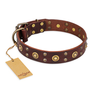 """Caprice of Fashion"" FDT Artisan Brown Leather Labrador Collar with Round Decorations"