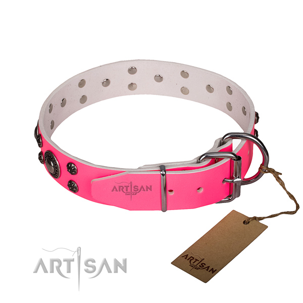 Fancy walking embellished dog collar of fine quality full grain leather