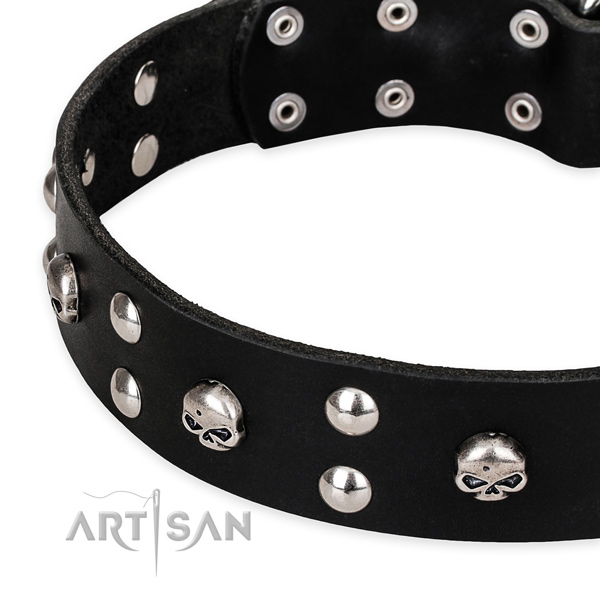 Everyday walking embellished dog collar of finest quality natural leather