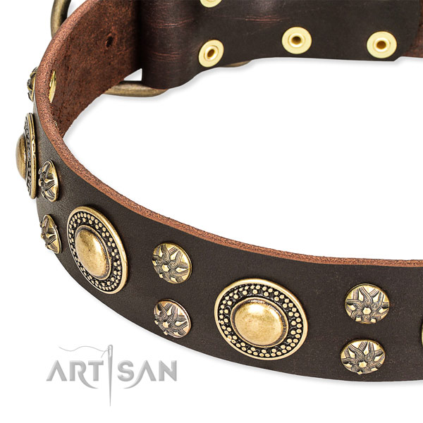 Fancy walking decorated dog collar of top quality full grain natural leather