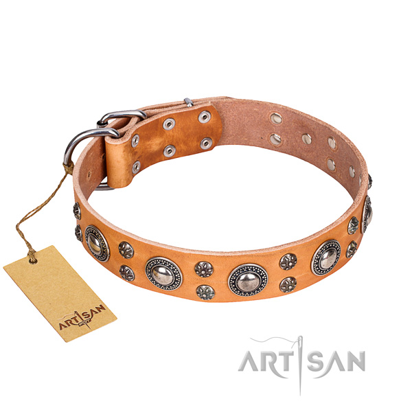 Fancy walking dog collar of high quality full grain genuine leather with decorations