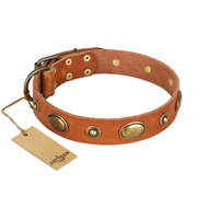 """Visual Magic"" FDT Artisan Tan Leather Labrador Collar for Daily Activities"