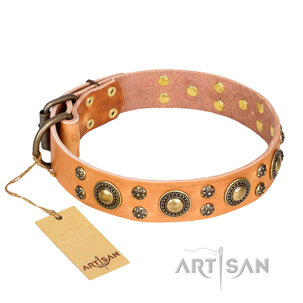 Fancy walking dog collar of finest quality full grain leather with embellishments
