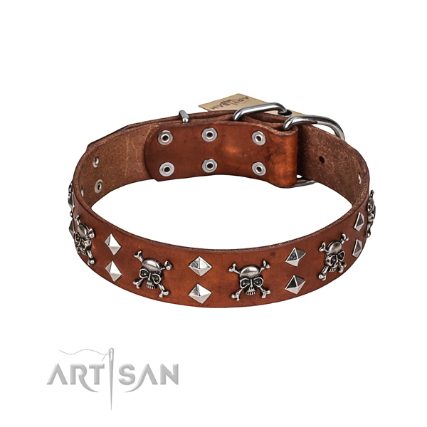 Daily walking dog collar of finest quality full grain natural leather with embellishments