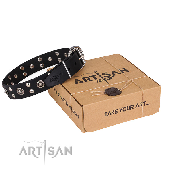 Fancy walking dog collar with Amazing corrosion resistant studs
