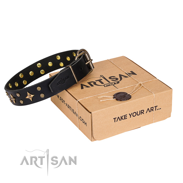 Daily walking dog collar of reliable leather with adornments