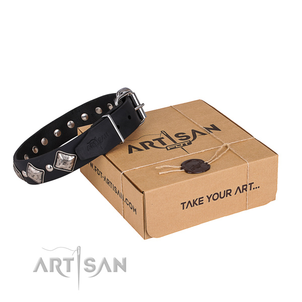 Everyday walking dog collar of best quality natural leather with studs
