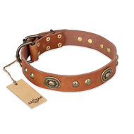"""Stunning Dress"" FDT Artisan Tan Leather Labrador Collar with Old Bronze Look Plates and Studs"