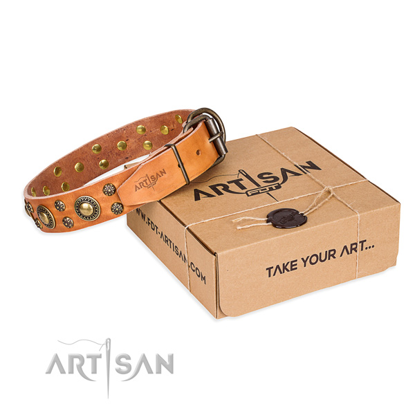 Fancy walking dog collar of top quality full grain genuine leather with decorations