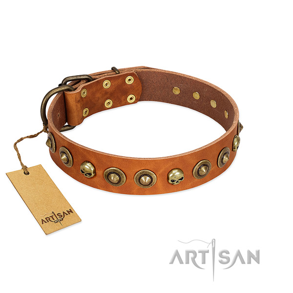 Genuine leather collar with significant studs for your doggie