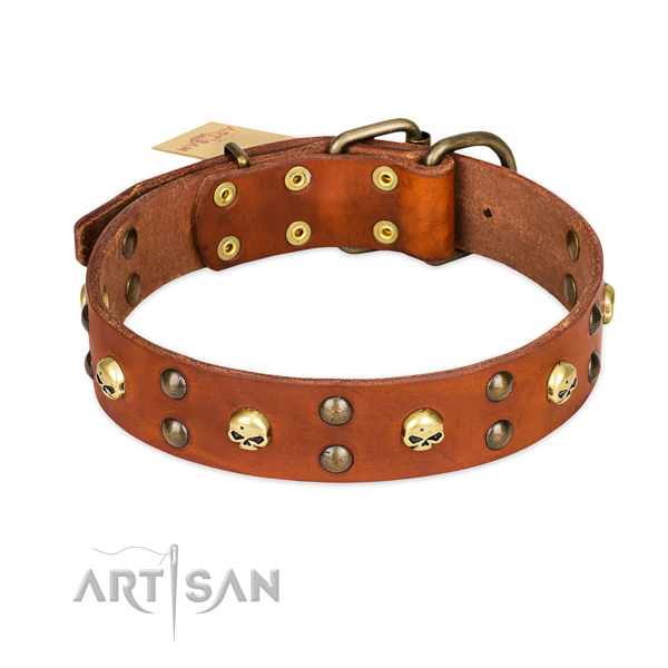 Daily walking dog collar of strong leather with embellishments