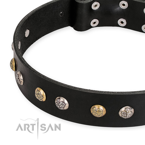 Full grain genuine leather dog collar with designer corrosion resistant studs