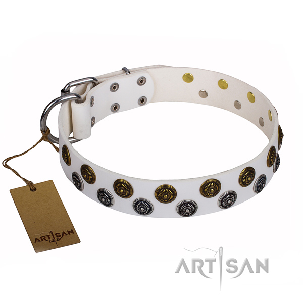 Walking dog collar of high quality leather with embellishments