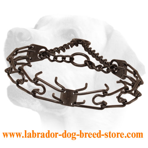 Pinch collar of corrosion resistant black stainless steel for badly behaved canines