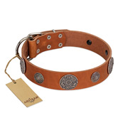"""Foxy Nature"" FDT Artisan Tan Leather Labrador Collar with Chrome Plated Brooches"