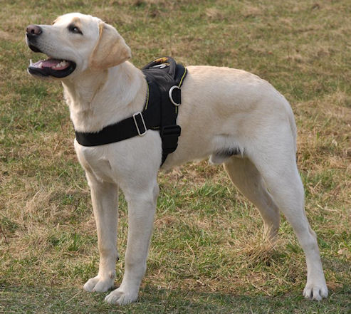 Nylon multi-purpose dog harness for tracking/pulling with extra
