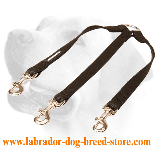 Nylon leash for walking with 3 Labradors