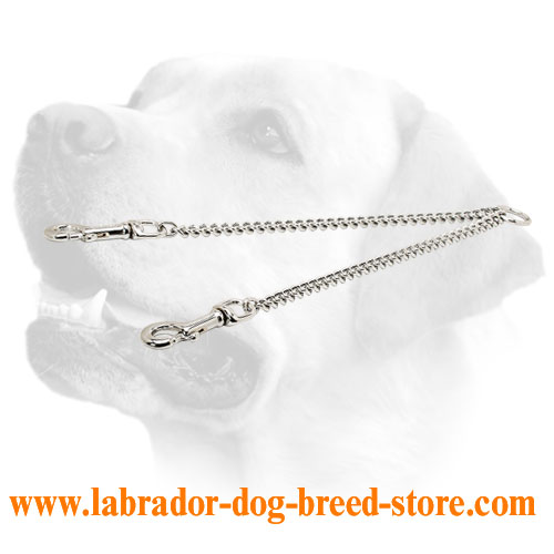 Chain coupler Labrador leash for 2 dogs handling