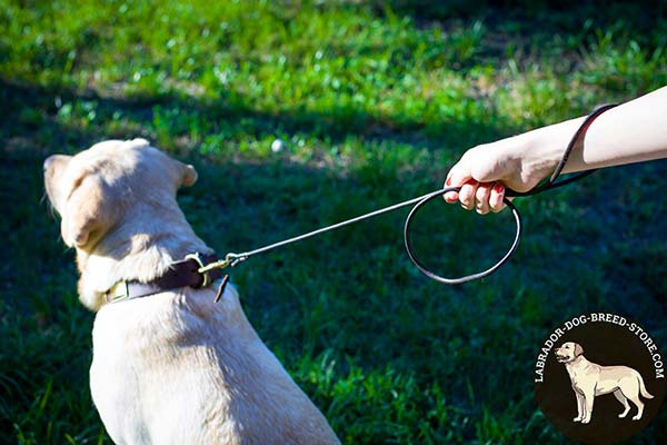 Labrador leather leash with strong hardware for basic training