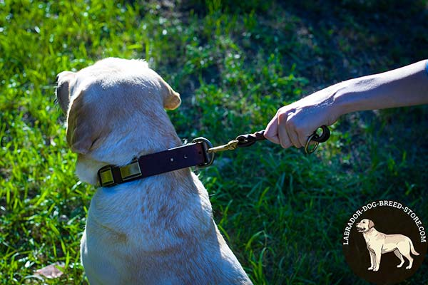 Labrador leather leash with rustless hardware for perfect control