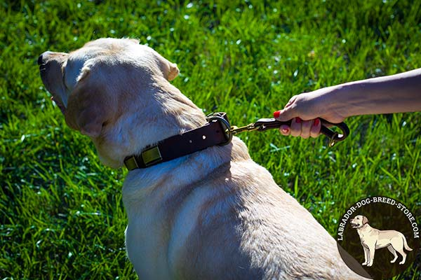 Labrador leather leash with corrosion resistant hardware for improved control
