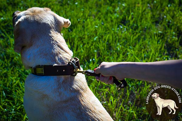 Labrador leather leash with rust-proof hardware for perfect control