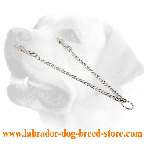 Chain leash for walking with 2 Labradors