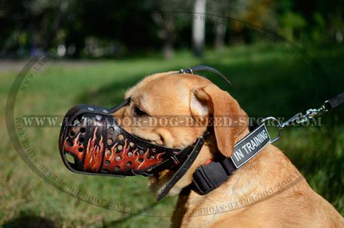 Buckled Leather Decorative Muzzle For Labrador