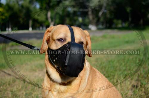 Practical Leather Labrador Muzzle