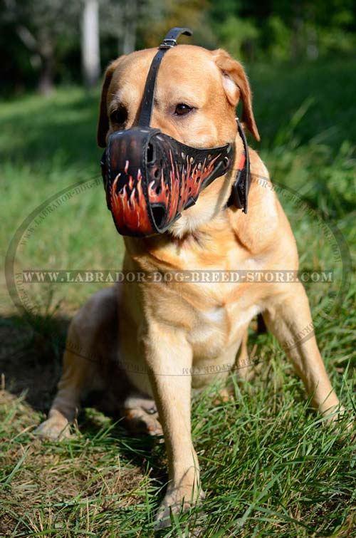 Decorative Leather Labrador Muzzle