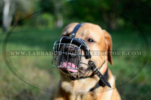 Leather Labrador Muzzle With Rustless Wire Cage
