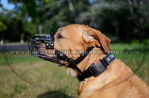 Safe Labrador Muzzle With Durable Leather Straps