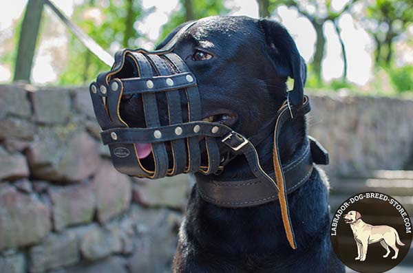 Leather Cage Labrador Muzzle with Good Air Flow